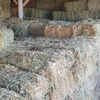 500-1000 Oaten/Rye/Clover Hay Small Squares