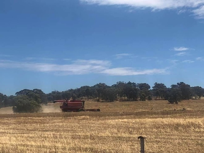 Coyote & Leeman Lupins Up to 200t