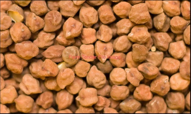 WANTED Desi Chickpeas 10mt