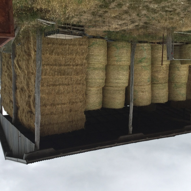 Pasture & Oaten 5x4 Rounds and 8x4x3 Bales