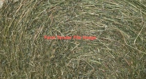 Wanted 4x4 Rolls of Lucerne & 4x4 Rolls of Oaten Hay