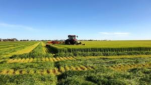 Barley Hay 720kg 8x4x3 Bales Shedded Tested
