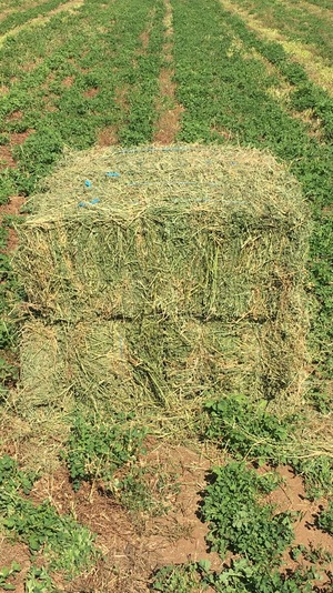 Organic Lucerne Hay For Sale