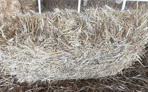 Wheat Straw Small Square Bales