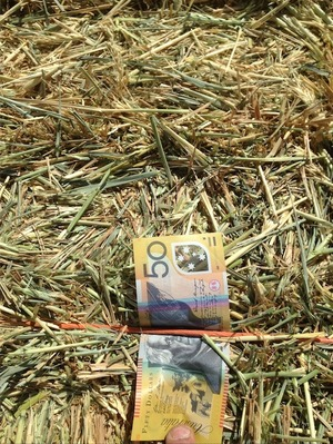 New Season Wheaten Hay For Sale 8x4x3's 400 Bales