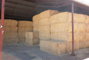 For Sale 90mt Oaten Hay