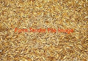 Triticale Grain