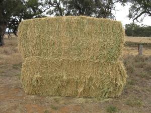 Pasture Hay