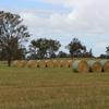 400 x Oaten Rye Hay 5x4 Round Bales - Price Reduced