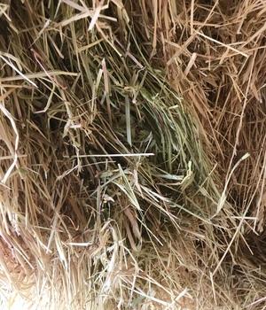 Oaten & Rye Mix Hay 8x4x3 (Shedded)