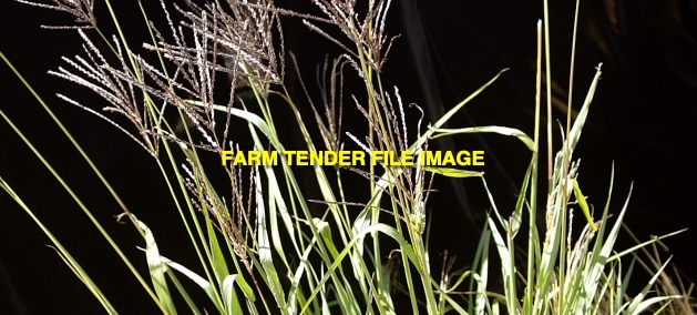 Premier Digit Grass - Coated