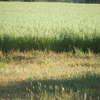 SEED Swan OATS