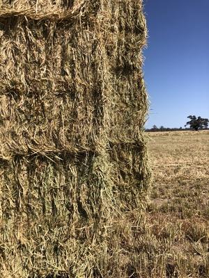 Barley Hay