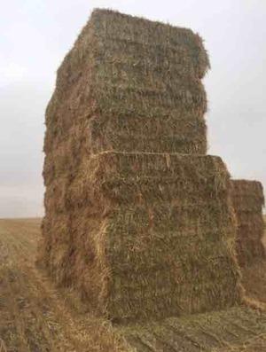 260mt Wheaten Hay 520kg 8x4x3 Bales