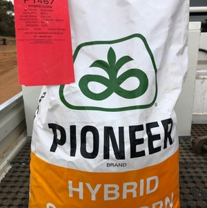 20 bags of Pioneer 1467 maize seed