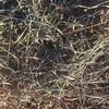 Pasture Hay Small Squares Top Quality