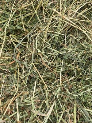 Pasture Hay Small Squares - Horse quality