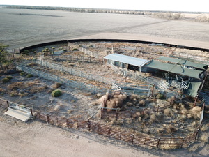 600 head Cattle Yards E.O.I for sale & removal