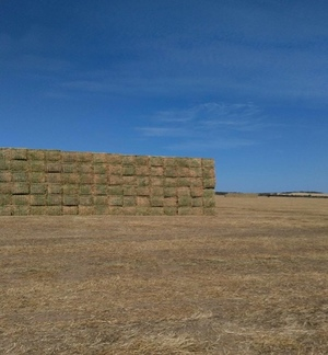 3500/mt of Clover Medic Hay