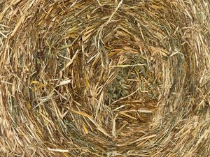 Oaten hay 4x4 rounds 350kg no weather damage