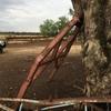 Tree Pusher