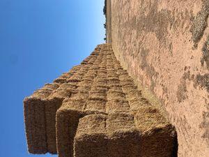 Wheaten Hay 8x4x3 New season
