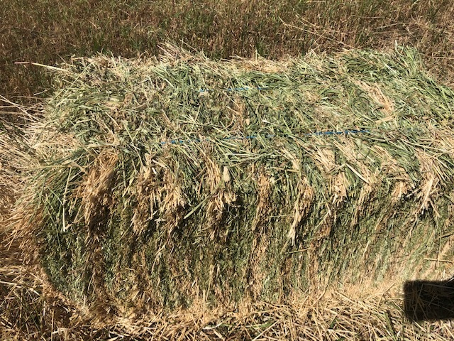 Ryegrass and clover hay