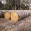 150 x Triticale Hay 385kg 5x4 Rolls