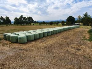 Silage PROTEIN 14.6% Oaten/Vetch/Clover