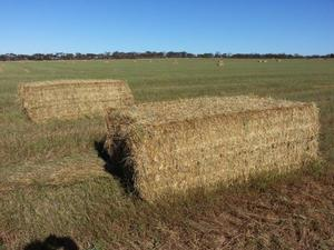 Certified Organic Pea/Ryegrass Hay