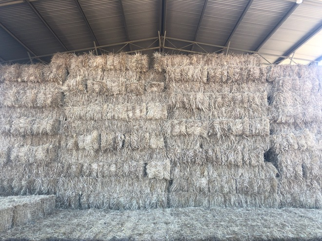 Irrigated Clover and Rye Small Square Bales