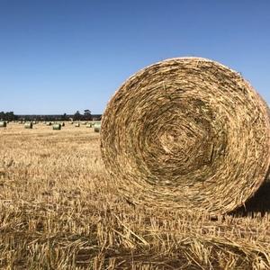 Wheaten/Rye Hay - 5x4ft HD Rounds