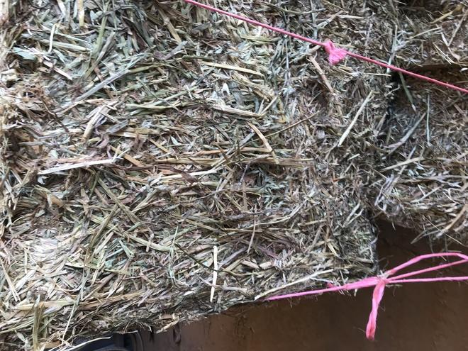 New Season Oaten Hay 8x4x3 Bales