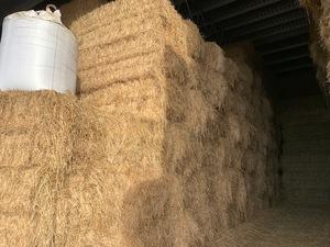 Wheat/Rye Hay 8x4x3