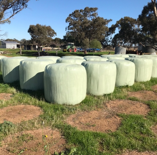 Certified Organic Silage