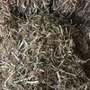 500 m/t Balansa Clover Hay