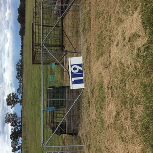 Under Auction - (A129) - NEW Pair of Gates 4.2m - 2% + GST Buyers Premium On All Lots