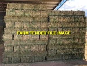 Grassy Lucerne Hay Small Square Bales