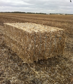 WANTED Bean Straw Tailings