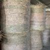 Hay wheaten rye rolls
