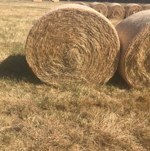 clover and rye round rolls
