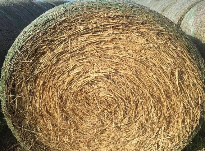 Wheaten Hay - Rounds Bales