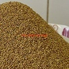 Premium Lucerne Seed - Good Forage & Hay Variety.