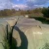 Improved Pasture Silage Heavy Bales Rye, Phylarus some Umbrella Grass