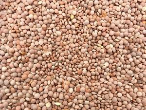 88mt Feed Lentils
