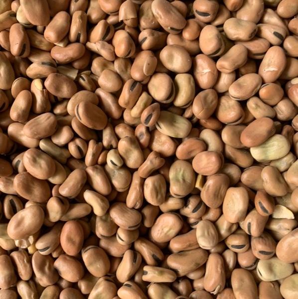 25mt Samira Faba Beans No.1s