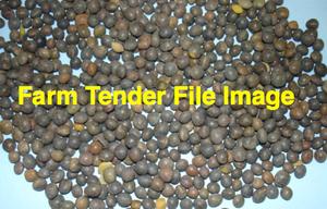 Aurora Lucerne Seed in 25kg Bags