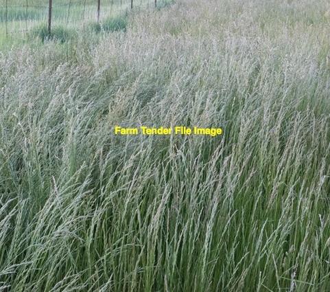 900 Acres Certified Organic Standing Pasture