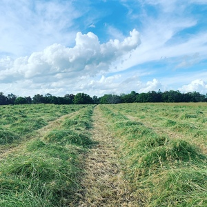 HAY RHODES GRASS .................4X4  ROUND....SMALL  SQUARE.....SILAGE   4X4R