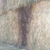 100 mt wheaten hay